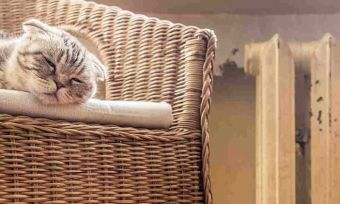 cat sleeping on couch next to heater