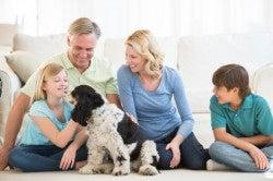 Household-pets-250x166 (1)