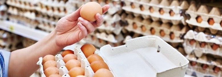 egg examination banner